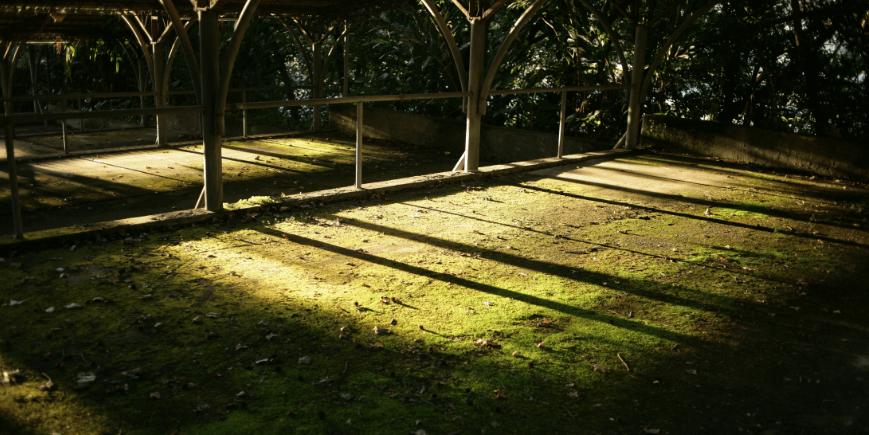 mossy patio