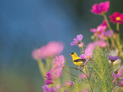 yellow bird pink flowers